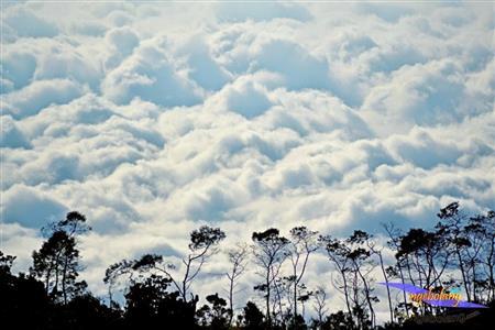 Gunung Prau Agustus thumbnail