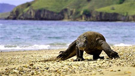 Pulau Komodo Maret thumbnail