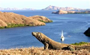 Pulau Komodo, Comodo Island thumbnail