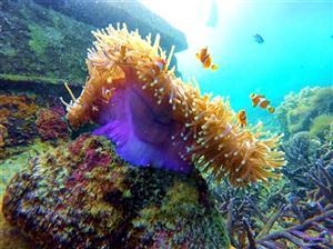 Pulau Pahawang Agustus thumbnail