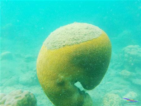 Pulau Pramuka 29-30 April 2017 thumbnail