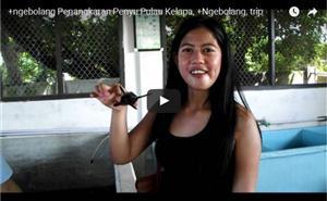 Penangkaran Penyu, Pulau Kelapa thumbnail
