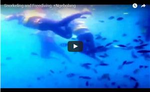 Snorkling at Pulau Melintang thumbnail