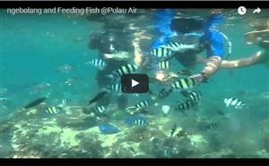 Feeding Fish at Pulau Air thumbnail