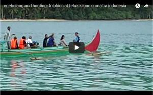 Hunting Dolphin at Kiluan thumbnail